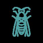 Disinfestazioni vespe e calabroni roma