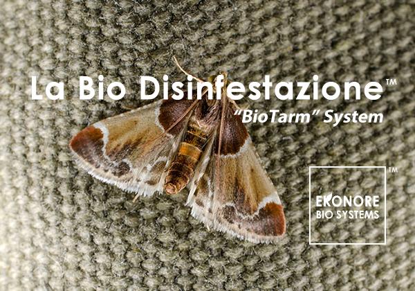 Disinfestazione Tarme a Milano azienda specializzata