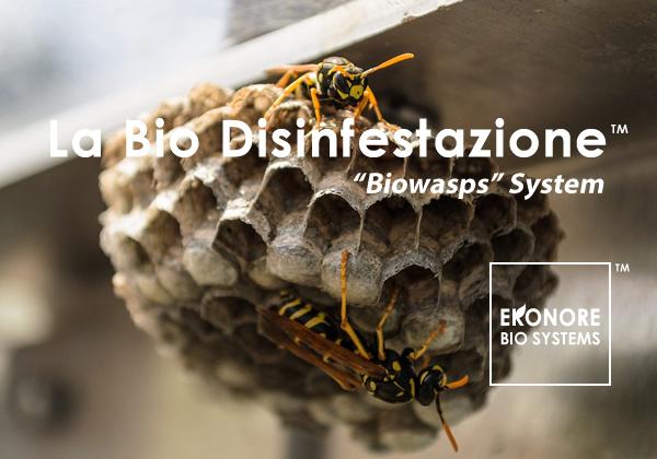 Disinfestazione milano rimozione nidi vespe calabroni