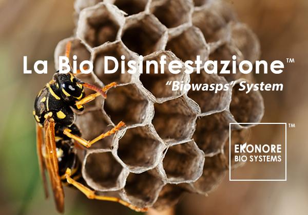 Rimozione nidi vespe calabroni disinfestazione milano