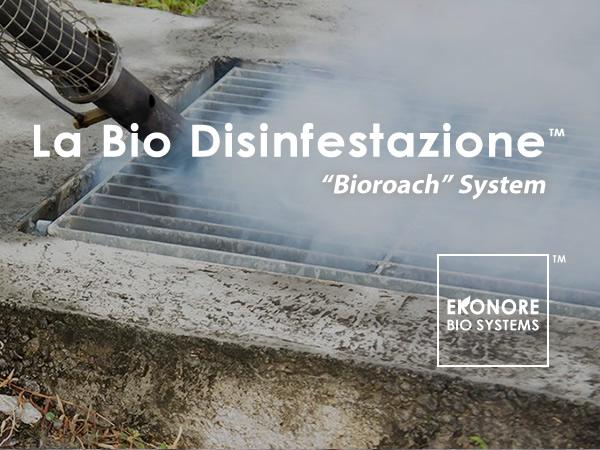 Deblattizzazione blatte Milano