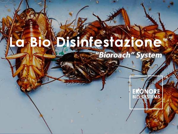 Disinfestazioni blatte e scarafaggi Milano