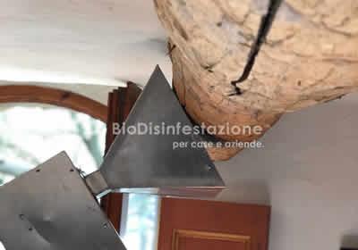 Azienda disinfestazione tarli del legno a roma