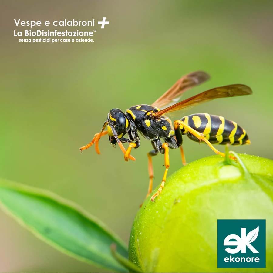 Azienda rimozione nidi vespe calabroni Milano
