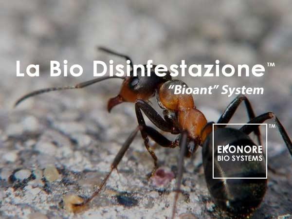 Disinfestazione Formiche a Milano Ditta Specializzata
